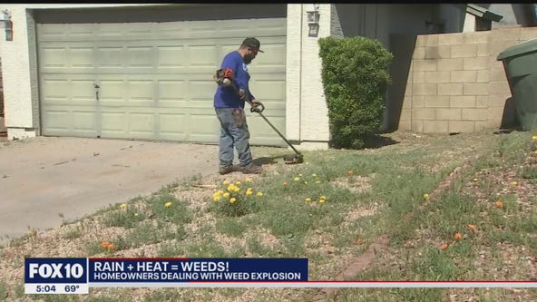 Valley homeowners tacking weed following major storm