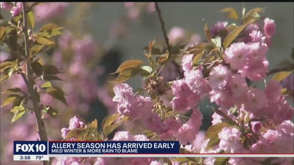 Blooming flowers signal tough times ahead for allergy sufferers