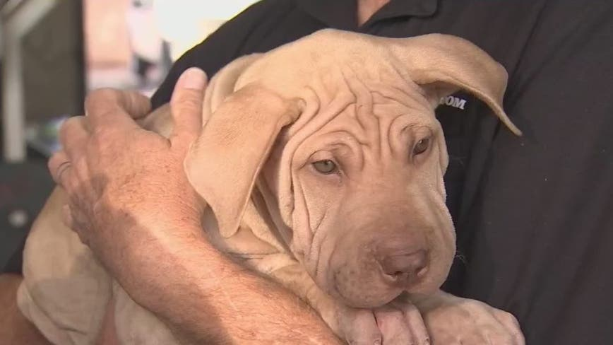 Puppies left in burning truck at Mesa gas station now up for adoption