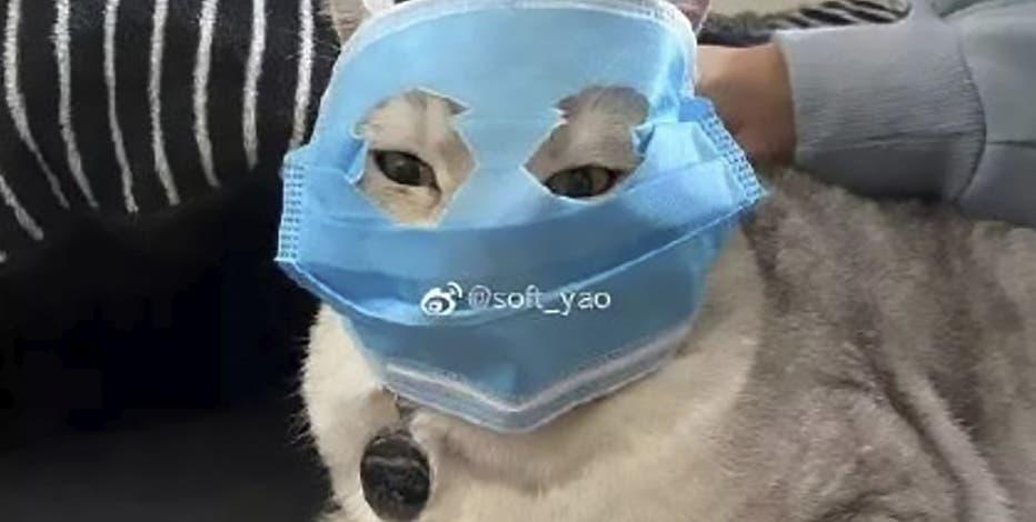 masque protection de coronavirus