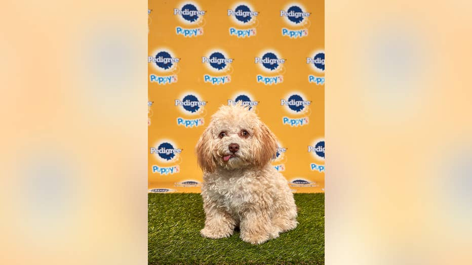 Huck-Puppy-Bowl.jpg