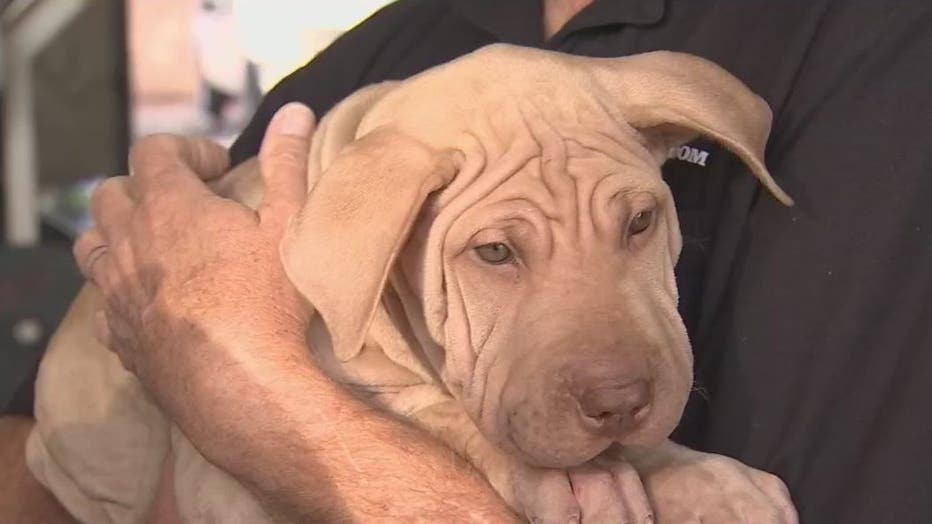 Puppies Left In Burning Truck At Mesa