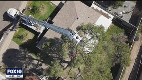 Drone Zone: Taking a look at conditions faced by tree trimmers