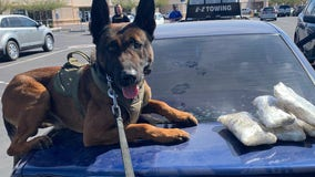 Goodyear PD K-9 Diko helps officers find $20K worth of meth during traffic stop