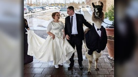 Ohio man brings llama dressed in tuxedo to sister's wedding, keeping 5-year-old promise