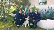 Scottsdale firefighters rescue golden retriever stuck in hole