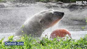 Zoos and aquariums offering live feeds during coronavirus pandemic