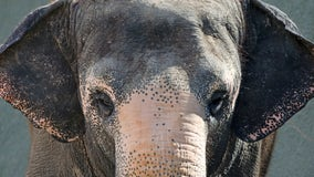 Reba, Asian elephant at Phoenix Zoo, dies at 51