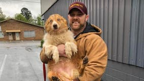 Tennessee family reunited with dog 54 days after deadly tornadoes
