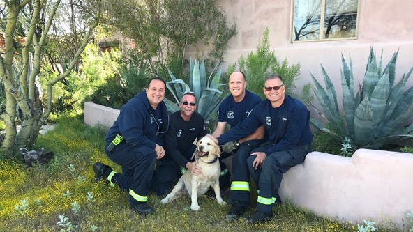 Scottsdale firefighters rescue golden retriever stuck in hole