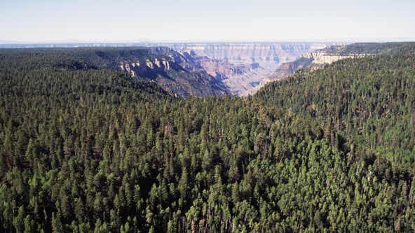 2 more Arizona forests plan to implement fire restrictions