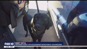 Meet Arizona's only ATF accelerant detection K-9