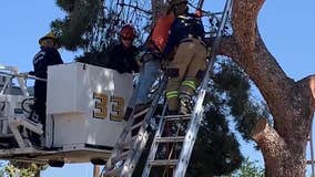 Worker rescued after getting tangled in tree in north Phoenix neighborhood