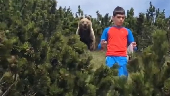 Nail-biting video shows boy's close encounter with brown bear during hike in Italian mountains