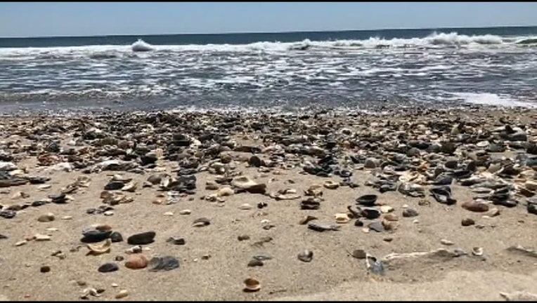 V-SEASHELLS OVERRUN BEACH_WTVTd2be_146.mxf.00_00_06_22.Still001