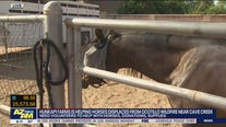 Hunkapi Farms helping horses displaced from Ocotillo Fire in Cave Creek