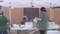 Nonprofit providing food boxes for public in Mesa