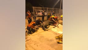 Scottsdale fire crews rescue horse from canal
