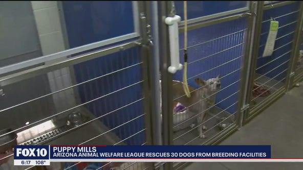 Arizona Animal Welfare League rescues 30 dogs from breeding facilities