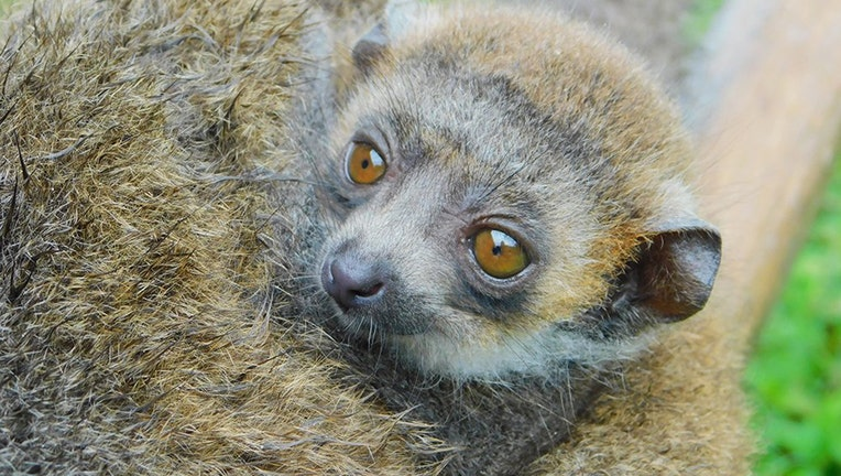 zoo-miami-lemur-3.jpg