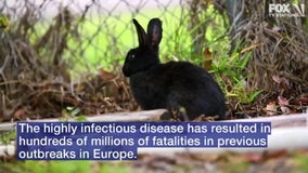 Wildlife officials to test dead rabbits for hemorrhagic disease