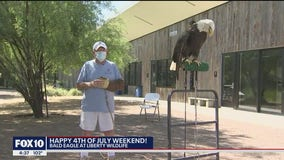 17-year-old Bald Eagle at Liberty Wildlife spreads patriotism