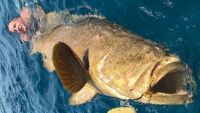 Massive fish pulls 2 Florida anglers off boat and into the water during struggle to reel it in