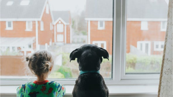'Dog years' is just a myth: New research shows non-linear relationship between dog and human years