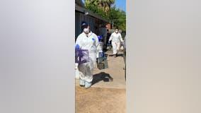 Arizona Humane Society: 227 rabbits and bunnies seized from Gilbert home