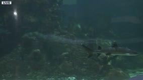Shark Week begins at Wildlife World Zoo