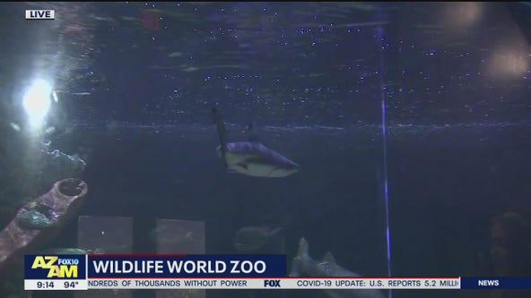 Shark Week at Wildlife World Zoo