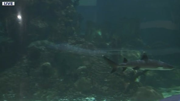 Shark Week begins at Wildlife World Zoo
