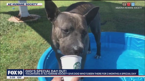 Gigi's Special Day Out: Phoenix dog waiting for her forever home treated to a fun day