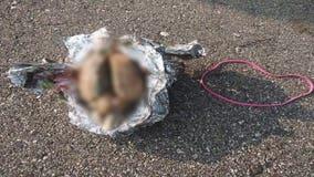 Medical examiner: Brain found along Racine beach not human