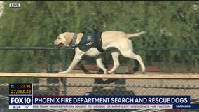 Phoenix Fire Department search and rescue dogs