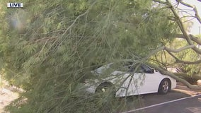 Tree topples over on car following monsoon storms in Queen Creek