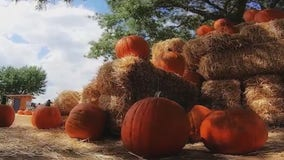 Looking for a way to enjoy fall in Arizona? Visit Mortimer Farms