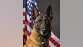 Scottsdale police K-9 Castro dies from brain tumor complications