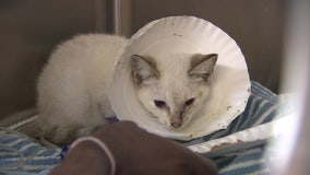 Kitten on the mend after being struck in face with arrow, search is on for shooter