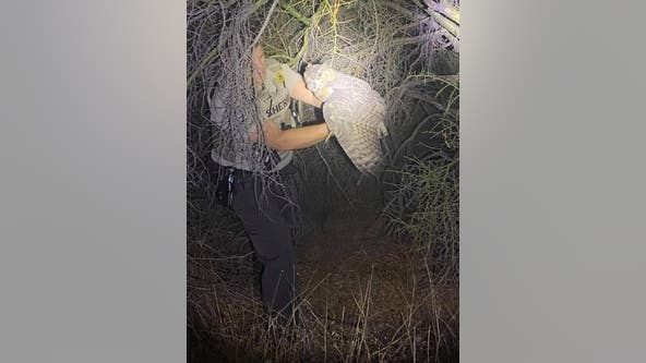 MCSO deputy saves owl that was found in the middle of the road