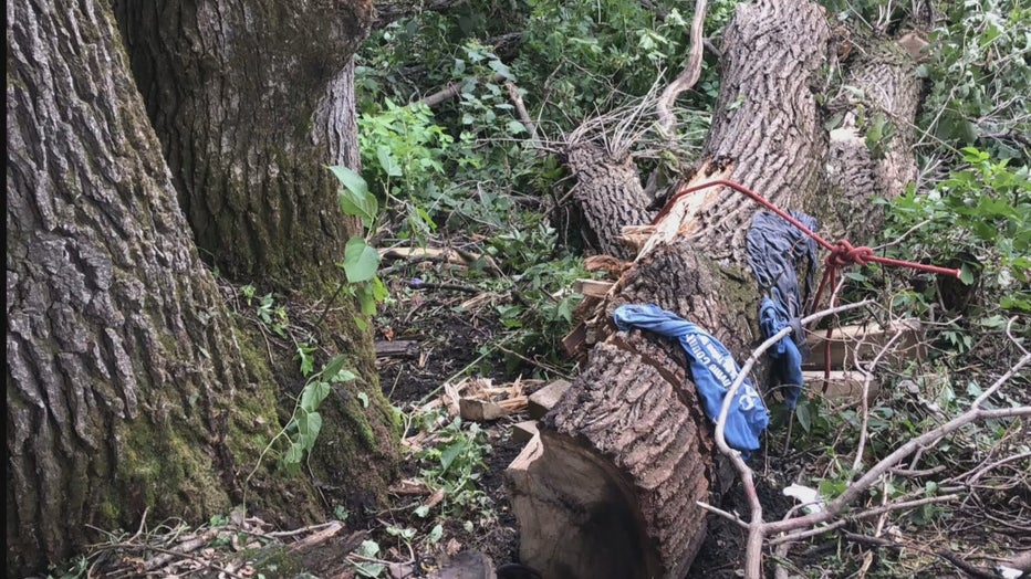 man stuck under tree