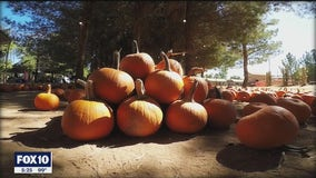 Pumpkin patch now open through end of October at farm in Gilbert