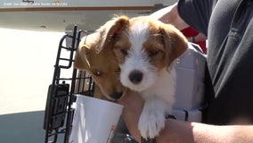 Dogs in need of homes flown to California to escape Hurricane Delta