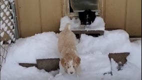 Colorado puppies wander in snow for 1st time