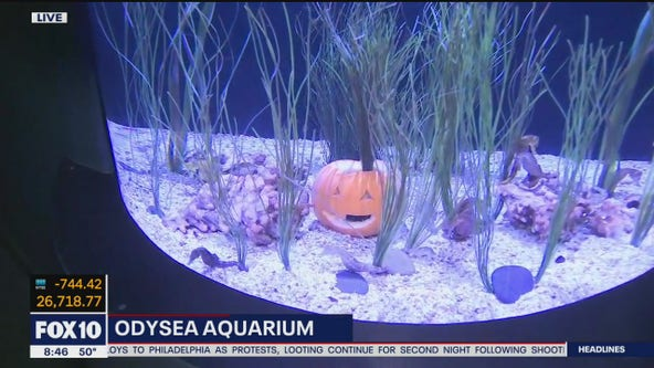 Celebrating Halloween at Odysea Aquarium in Scottsdale