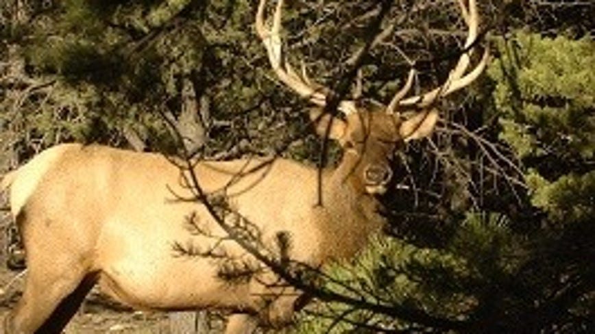 Arizona elk poaching case unsolved; $6,500 reward for tips