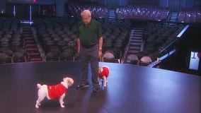Expensive but true: Arizona man pays big money to clone his aging dog