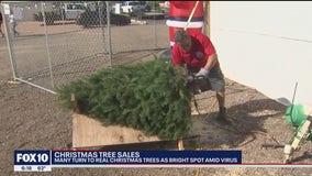 Real Christmas Trees make comeback this holiday season