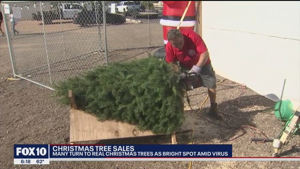 Real Christmas Trees make comeback this holiday season