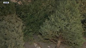 City of Mesa offers Christmas tree recycling program